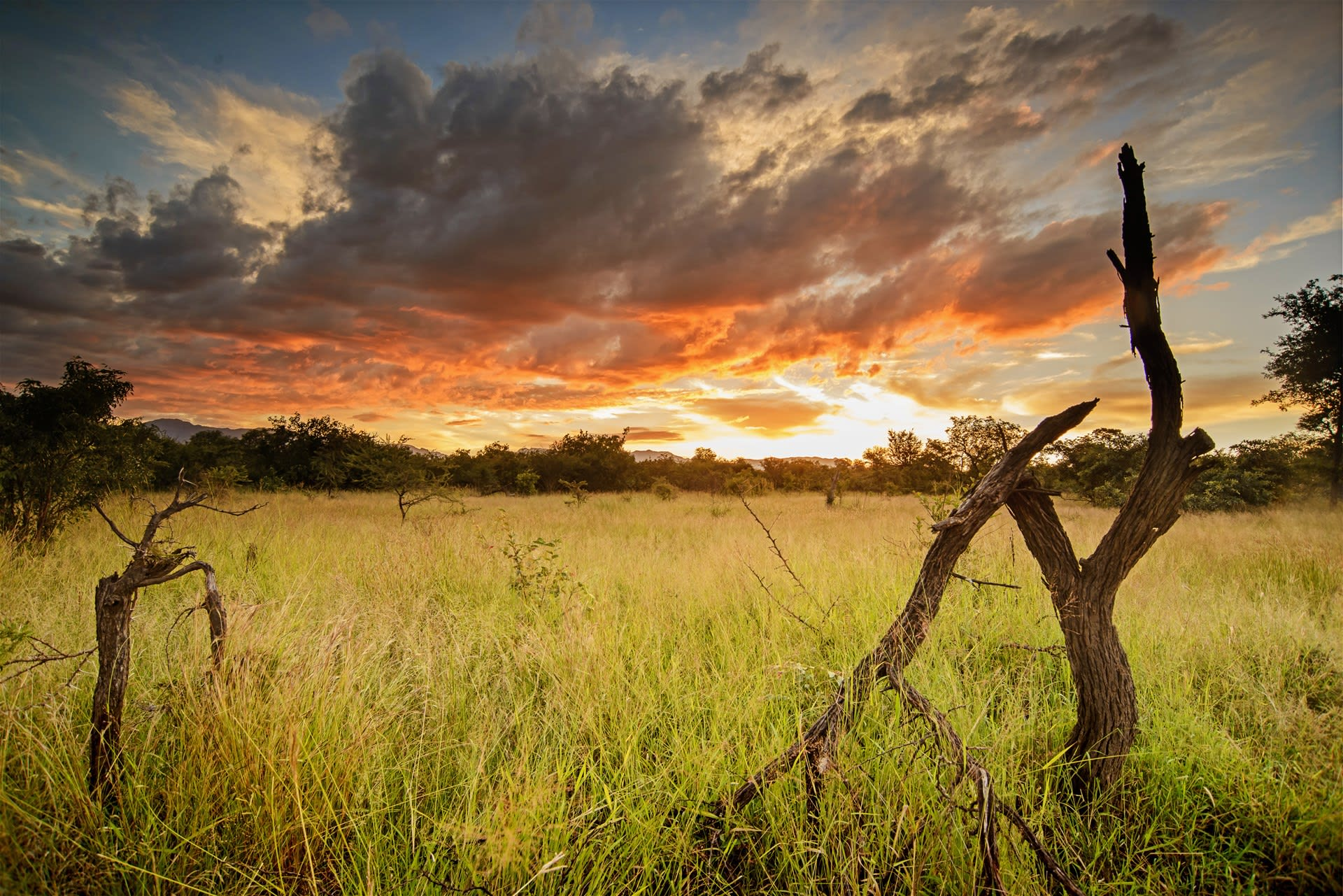 Karongwe Game Reserve Hotels