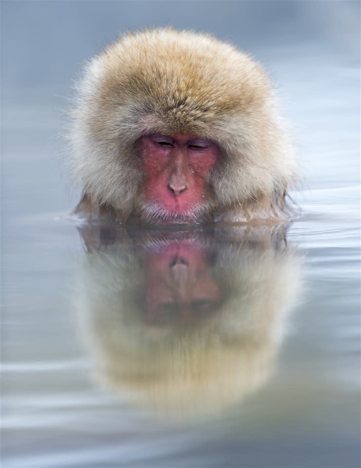 Snow Monkeys & Onsen