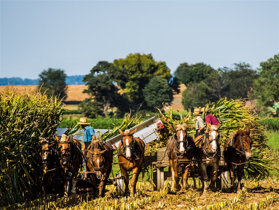 Amish Experience Tour