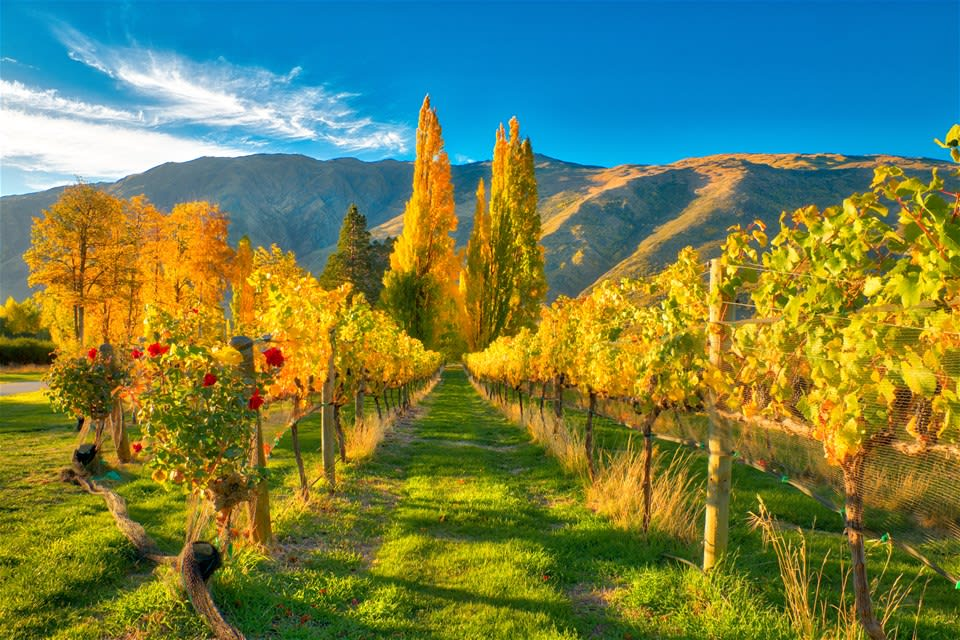 New Zealand's Food and Wine Trail