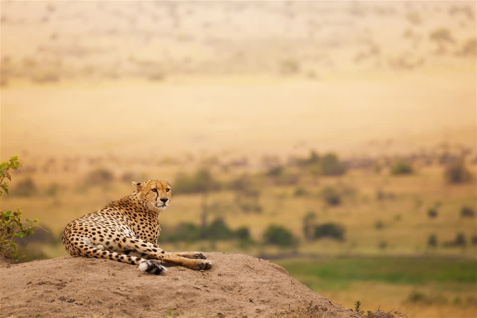 Through The Rift Valley (small group)