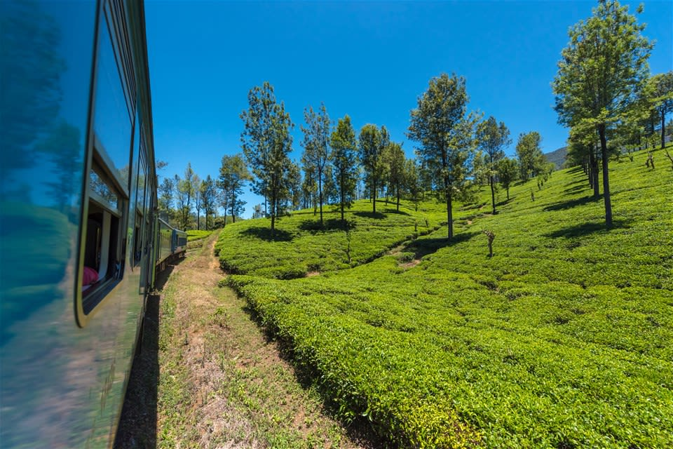 Train Journey through the Tea Country