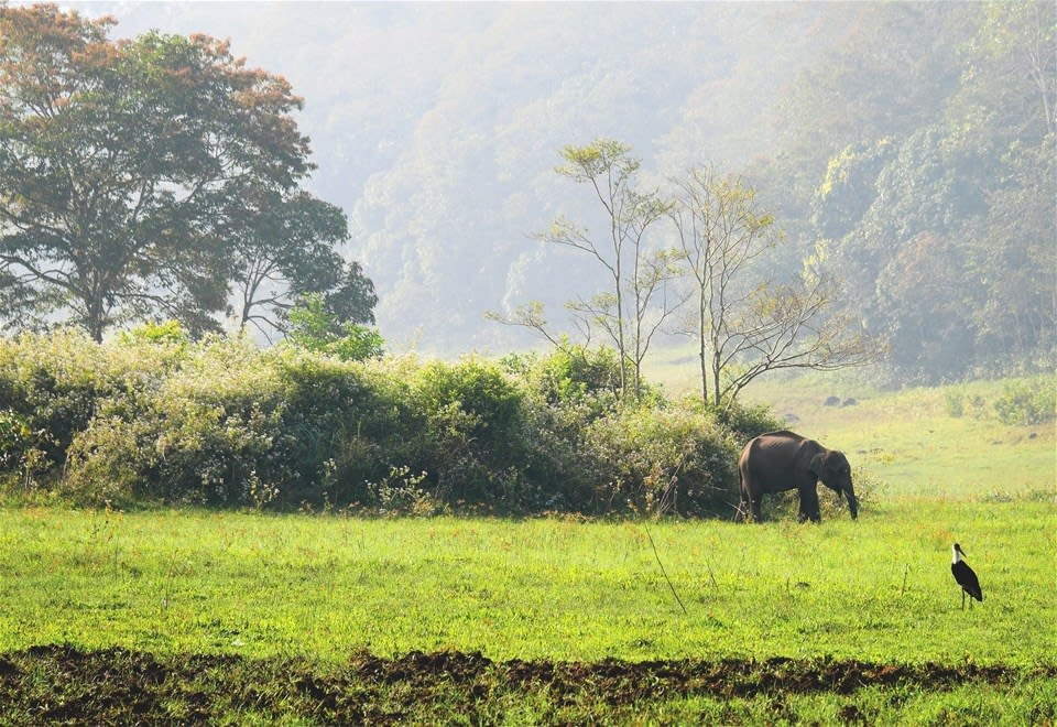 Hiking through the Periyar Wildlife Sanctuary