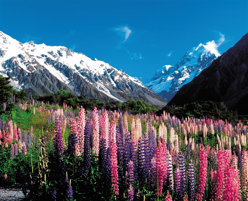 Ultimate South Island Escape