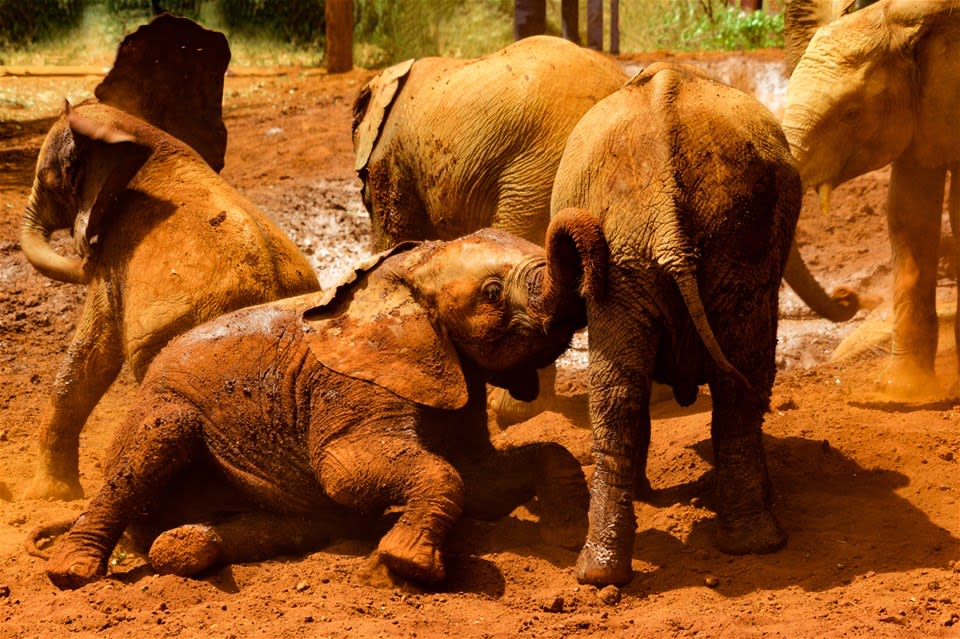 Sheldrick Elephant Orphanage & Out of Africa Experience