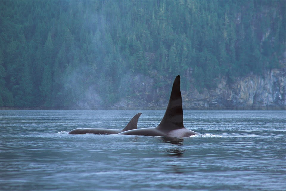 Ucluelet Whale Watch Tour by Covered Boat