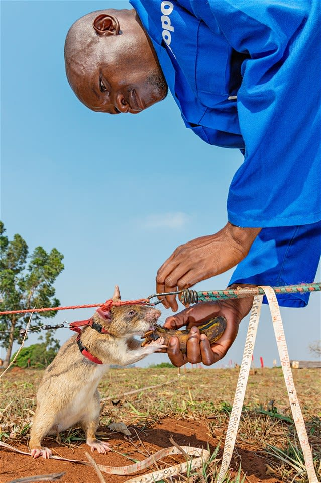 Meet the HeroRats at the APOPO Centre