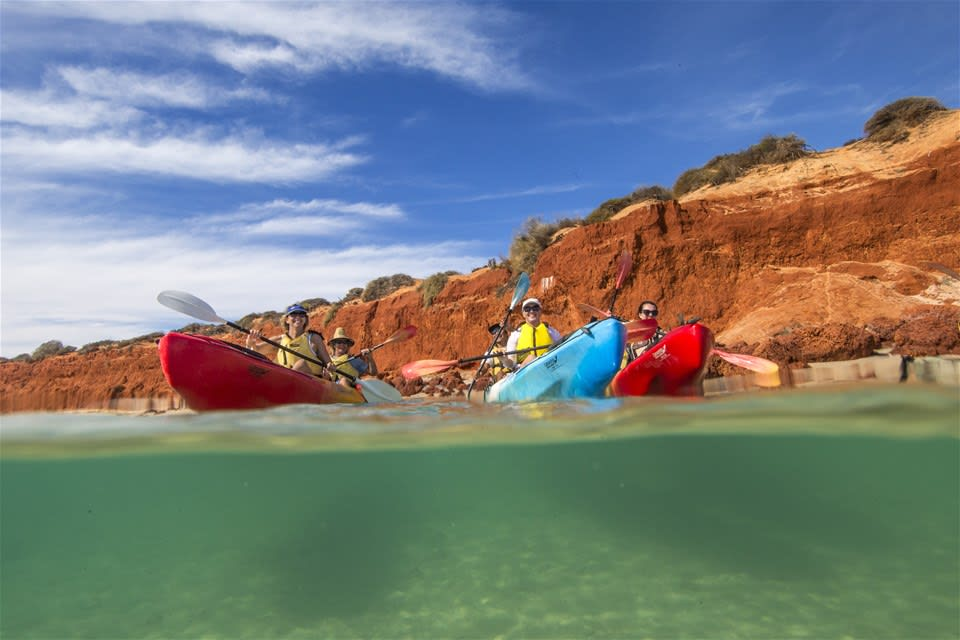 Shark Bay Kayak & Wildlife Adventure