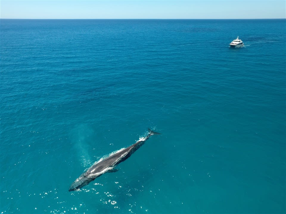 Dunsborough Whale Watch Tour