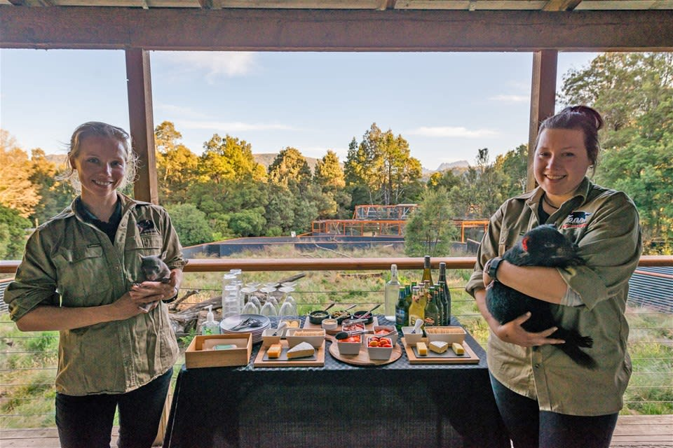 An Evening with Tasmanian Devils