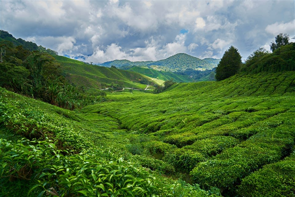 Cameron Highlands Explorer