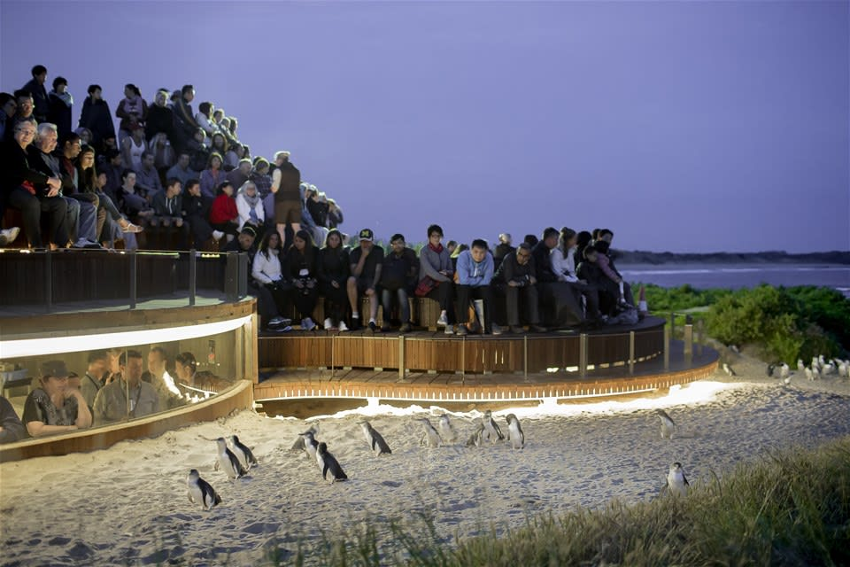 Penguin Parade Plus Viewing Platform