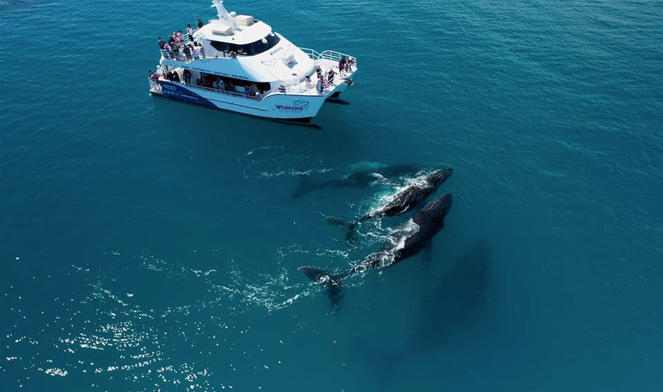 Hervey Bay Whale Watch Tour
