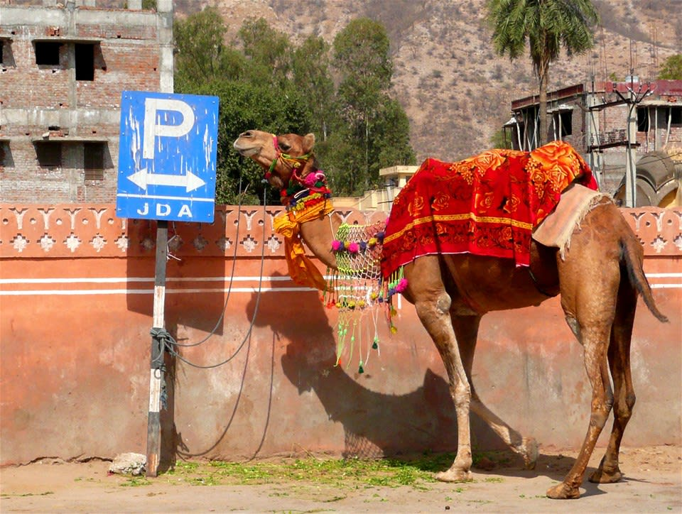 Jaipur Heritage Walking Tour