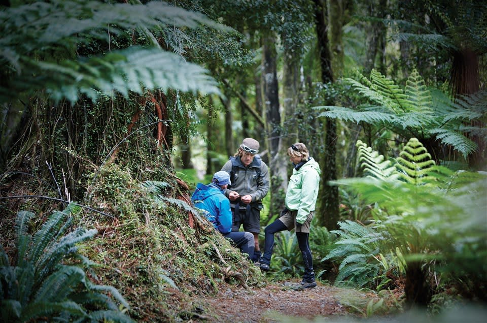 Hollyford Track 2 Night Guided Walk