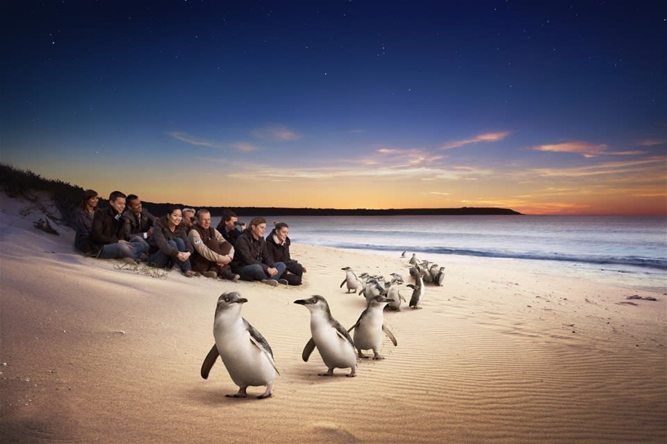 Ultimate Penguin Parade