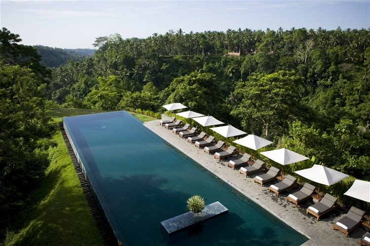 Large clear rectangular infinity pool lined with white loungers and parasols set amongst rich vegetation at Alila Ubud, Bali