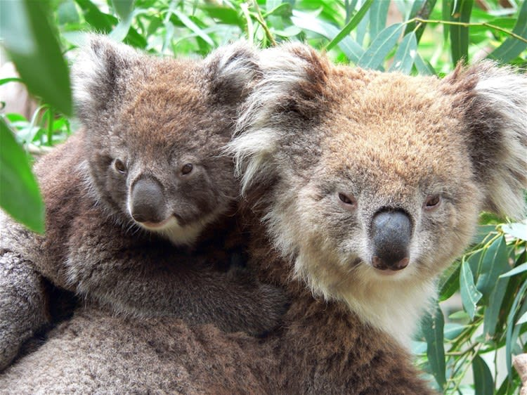 Koala Sanctuary & River Cruise