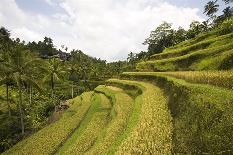 Bali's Countryside Activities