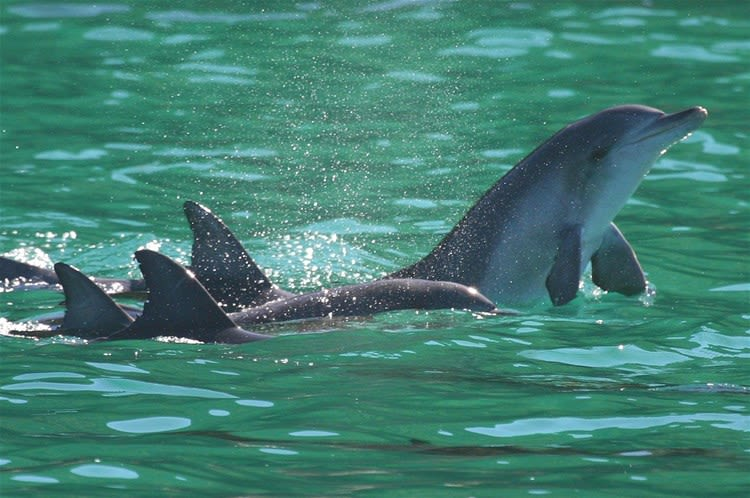 Port Stephens Dolphin Cruise