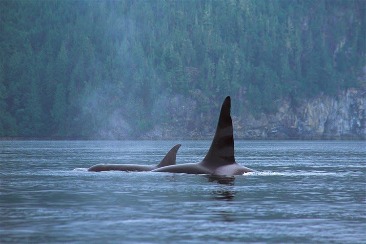 Tofino Whale Watch Tour by Covered Boat